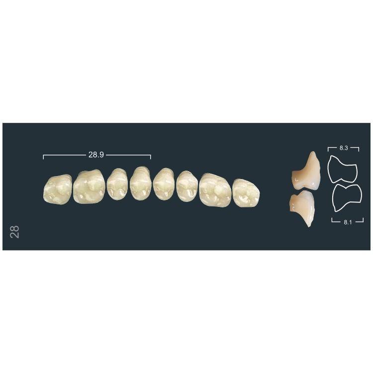Зубы боковые в/ч 510/28М Ивокляр