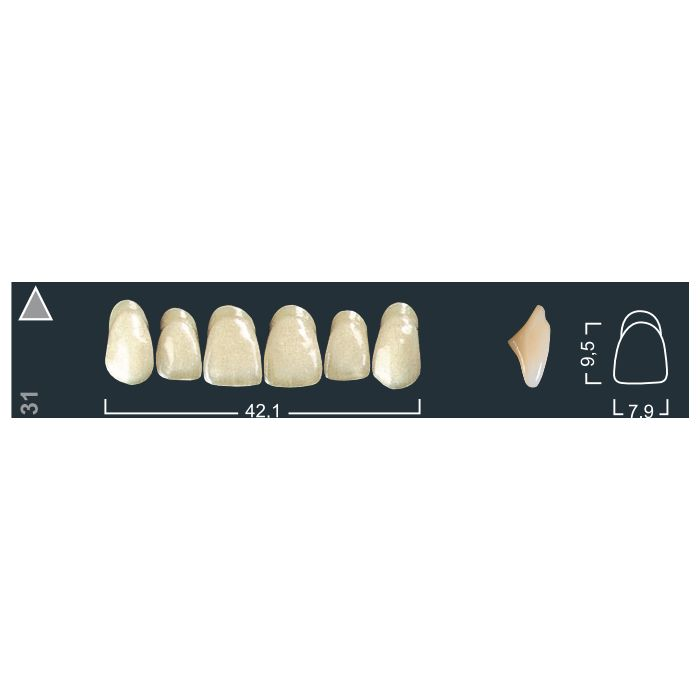 Зубы фронтальные в/ч 130/31 Ивокляр А2