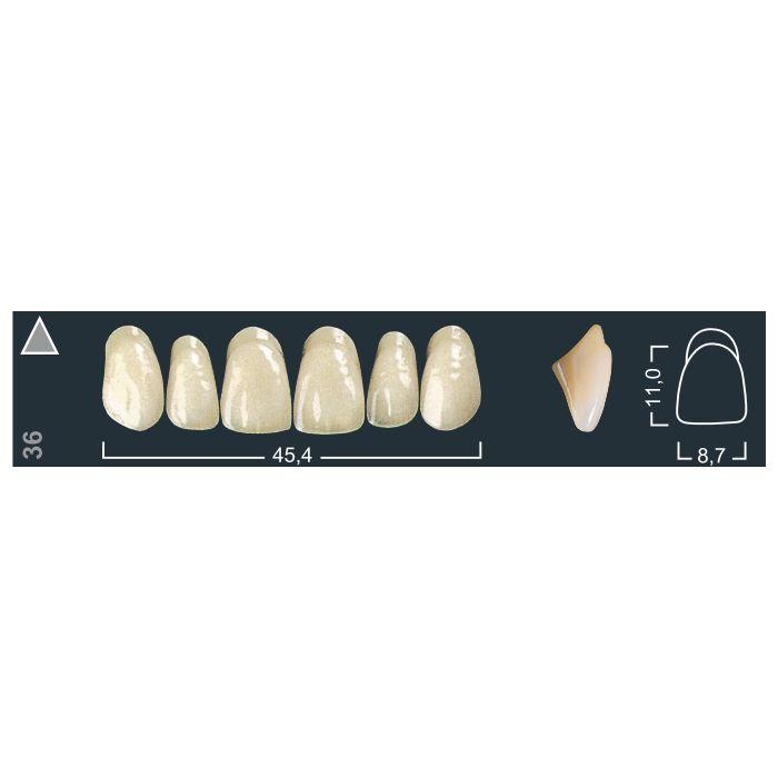Зубы фронтальные в/ч 140/36 Ивокляр