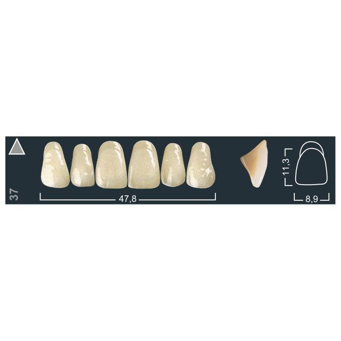 Зубы фронтальные в/ч 510/37 Ивокляр