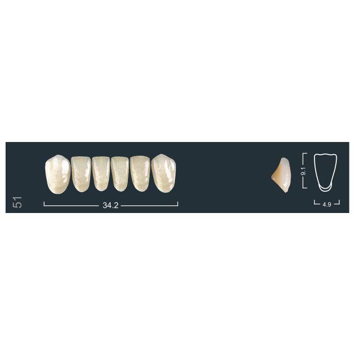 Зубы фронтальные н/ч 420/51 Ивокляр