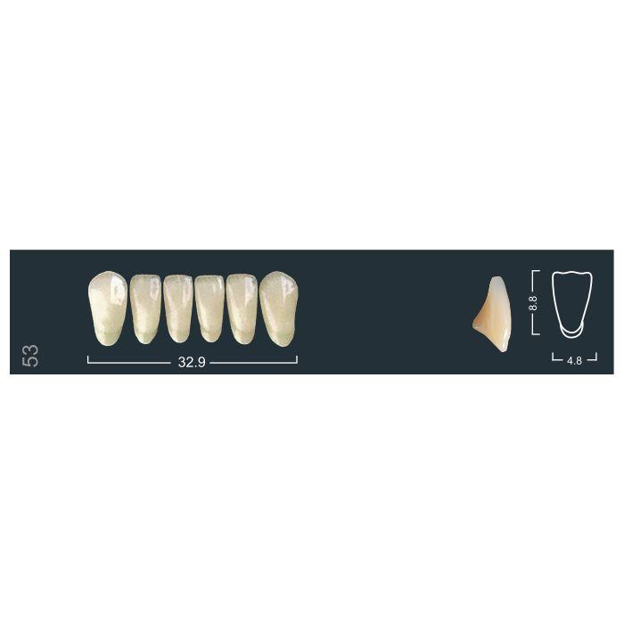Зубы фронтальные н/ч 420/53 Ивокляр