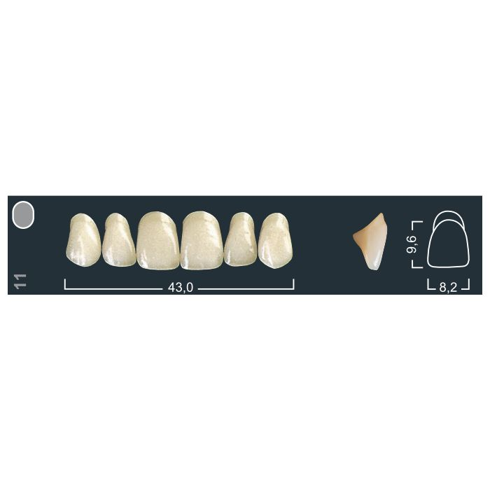 Зубы фронтальные в/ч 220/11 Ивокляр