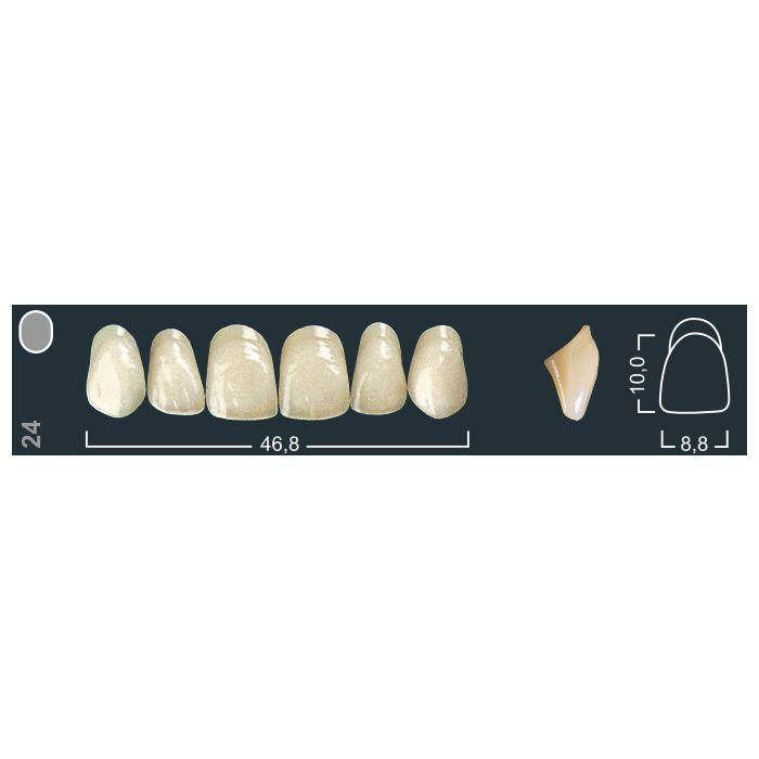 Зубы фронтальные в/ч 220/24 Ивокляр