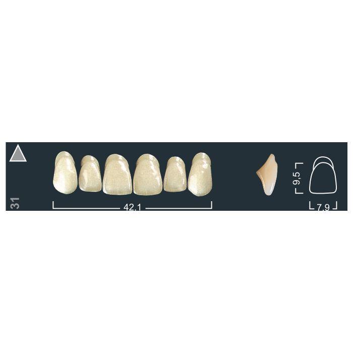 Зубы фронтальные в/ч 220/31 Ивокляр