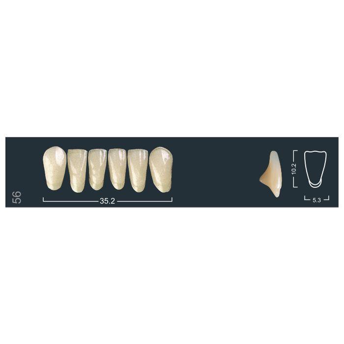 Зубы фронтальные н/ч 220/56 Ивокляр