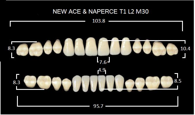 """Зубы""""GLORIA NEW ACE""""фасон T1, цвет В2 (28шт.)"""
